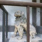 Komainu 2 at Himure Hachimangu Shrine