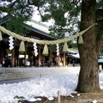 Meiji Jingu Shrine Sacred Shinto Straw Rope
