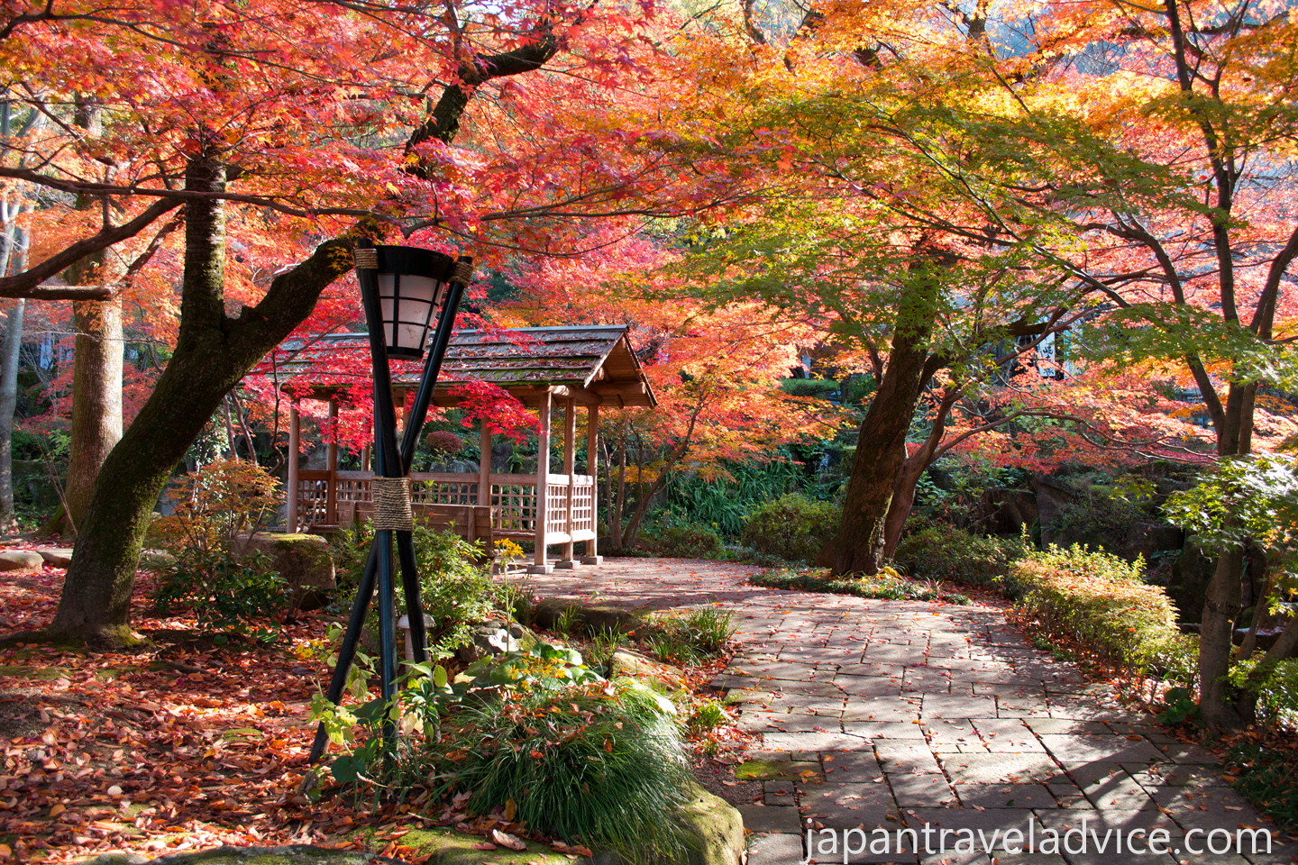 November Autumn Colours in Japan